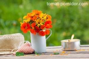 Латинка семена - засаждане и грижи, отглеждането на домати в лятна вила