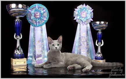 Развъдник български сини котки razdolie предлага котенца от родители, озаглавени, е в