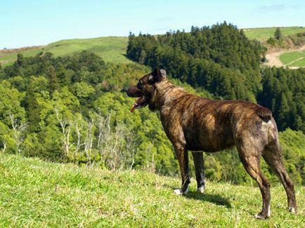 10 Застрашени породи кучета, свежо - най-доброто от деня, в който някога ще се нуждаете!