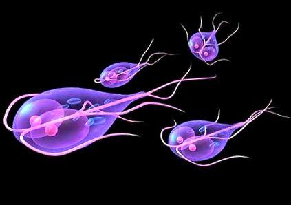 paraziták amelyek furunculosist okoznak)