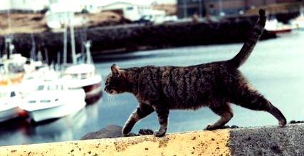 de ce ar pierde o pisică în greutate)