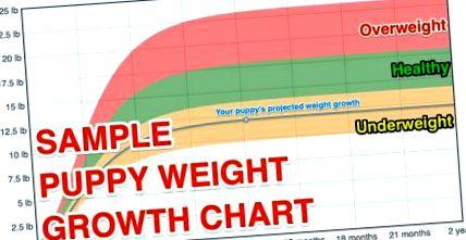 grăsime de creștere a creșterii greutății)