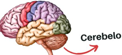 cerebelul este responsabil de vedere vederea a scăzut din pastile