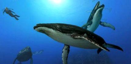 pierderea în greutate de balenă