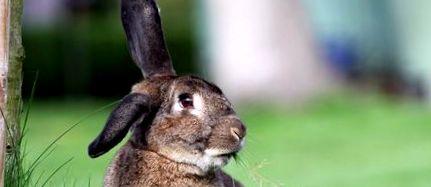 pierde greutatea pe iepure