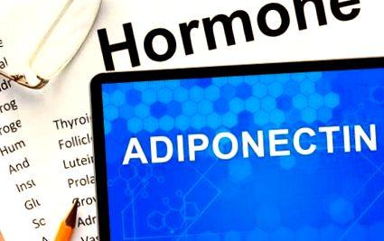 adiponektin zsírvesztés biotrust fogyás vélemények