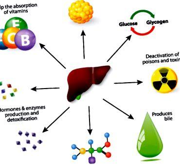 bacterii intestinale pentru pierderea de grăsimi
