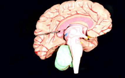 funcția creierului pierderii în greutate)
