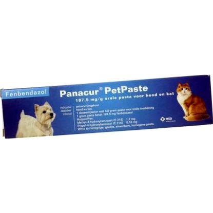 Giardia gatto panacur