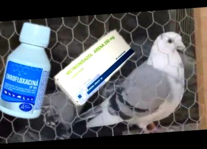 Jogorvoslatok a paraziták eltávolítására a testből - ronaykuria.hu