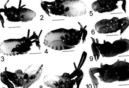 a pinworms megelőzése felnőtteknél a paraziták eltávolítása a testből nyírkátránnyal