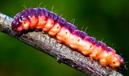 a férgek rovarok
