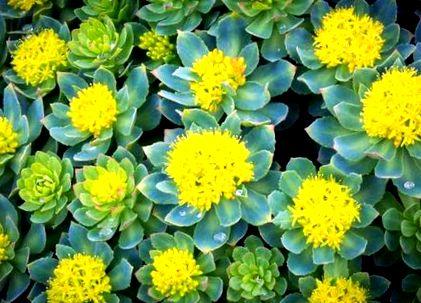 gyógynövények a fogyásig