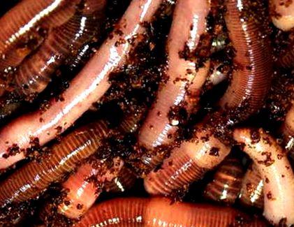 férgek mint felnőttnél kezelni a felsorolt szervezetek közül melyek a paraziták
