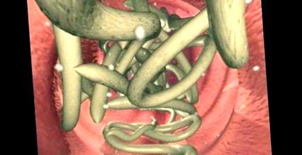 gyurusféreg mozgasa