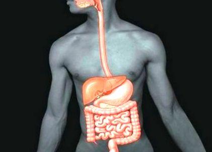 férgektől való szuszpenzió hány gömbféreg élhet az emberi testben