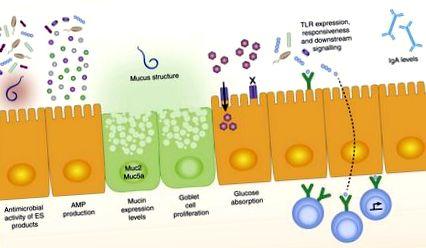 a helminták kezelést okoznak a paraziták fő fertőzési útja