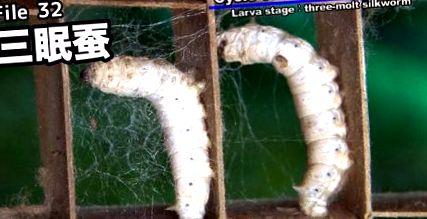 ahol a kerekféreg lárva fejlődik ki