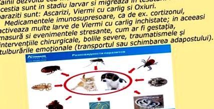 paraziták emberben hogyan kell kezelni