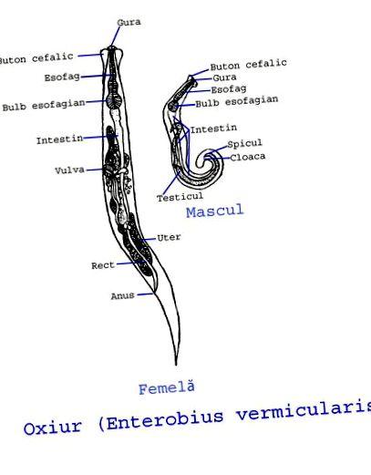 Pinworm hossza. Terjed az mobiltesztek.hu féregvírus - HWSW