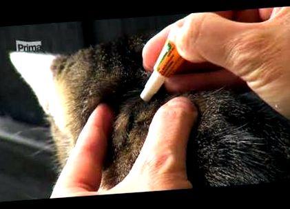 paraziták Habarovszk szájüregi hasmenés szaga okozza