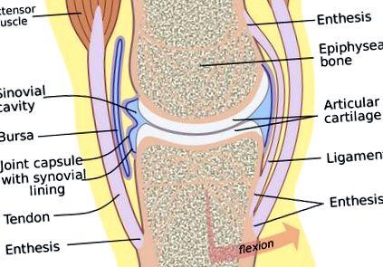 térdízületek fájdalmának gyógyszeres kezelése