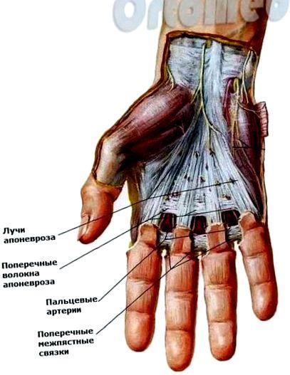 mopszok közös kezelése hogyan lehet enyhíteni a lábak ízületeit
