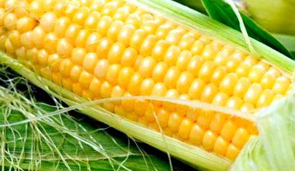 a kukorica lefogy a cla hatékony zsírégető