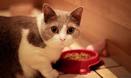 11 Cele mai bune produse alimentare umede pentru pisici - rating în 2019 (top 11)