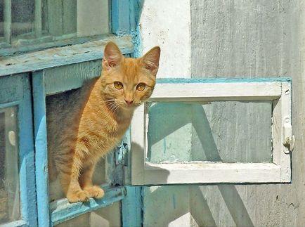 Cat pe fereastra, sau periculoase decât o pisică cădere de la înălțime