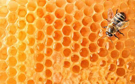 10 lucruri care pot să dispară pentru totdeauna dacă albinele mor (11 poze)