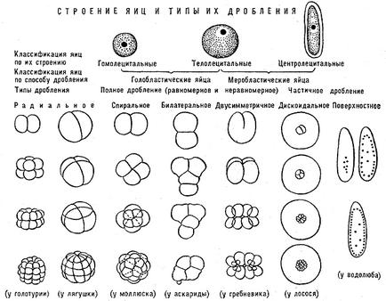 Dicționar biologie