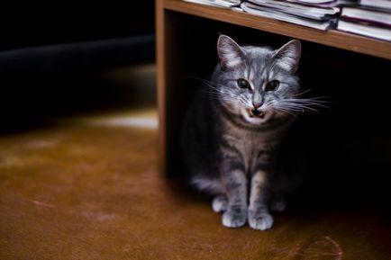 Citește articole științifice despre pisici și comportamentul lor, petsforward