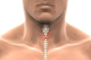 Hipertiroidismul este tratat prin remedii populare, plante aromatice