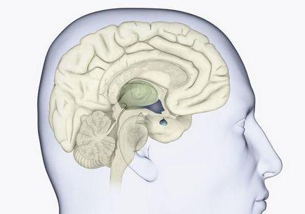 Cauzele nanism pituitare, simptome, tratamentul bolii