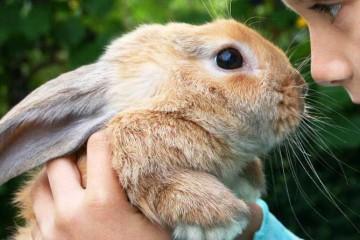 Rabbit cum să dau nume pentru iepure - fată, băiat